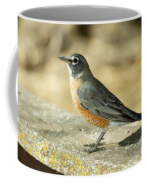 Birds Coffee Mug featuring the photograph Robins by Lori Tordsen