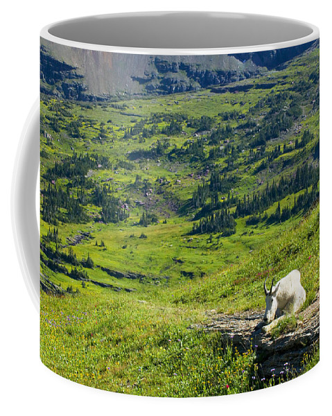 Glacier National Park Coffee Mug featuring the photograph Rocky Mountain Goat Glacier National Park by Rich Franco
