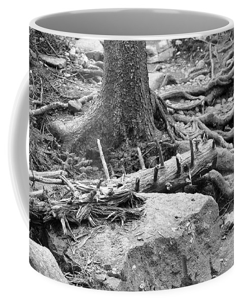Roots Coffee Mug featuring the photograph Roots by David Rucker