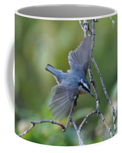Birds Coffee Mug featuring the photograph Rose Breasted Nuthatch Flying by Lori Tordsen