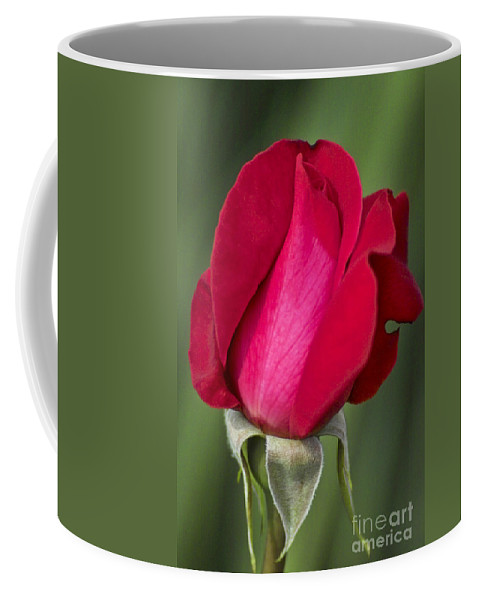 Rose Coffee Mug featuring the photograph Rose Flower Series 1 by Heiko Koehrer-Wagner