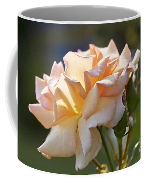 Rose Coffee Mug featuring the photograph Rose Flower Series 15 by Heiko Koehrer-Wagner