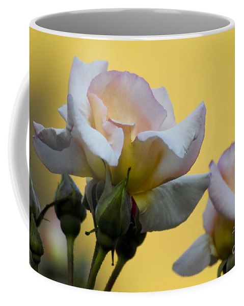 Rose Coffee Mug featuring the photograph Rose Flower Series 3 by Heiko Koehrer-Wagner