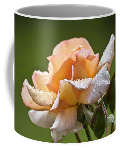 Rose Coffee Mug featuring the photograph Rose Flower Series 4 by Heiko Koehrer-Wagner