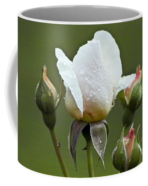 Rose Coffee Mug featuring the photograph Rose Flower Series 5 by Heiko Koehrer-Wagner