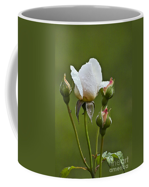 Rose Coffee Mug featuring the photograph Rose Flower Series 6 by Heiko Koehrer-Wagner