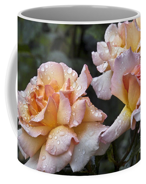 Rose Coffee Mug featuring the photograph Rose Flower Series 7 by Heiko Koehrer-Wagner