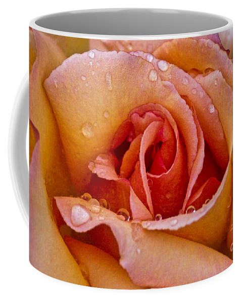Rose Coffee Mug featuring the photograph Rose Flower Series 8 by Heiko Koehrer-Wagner