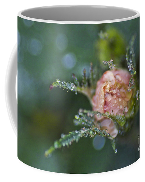 Rose Coffee Mug featuring the photograph Rose Flower Series 9 by Heiko Koehrer-Wagner
