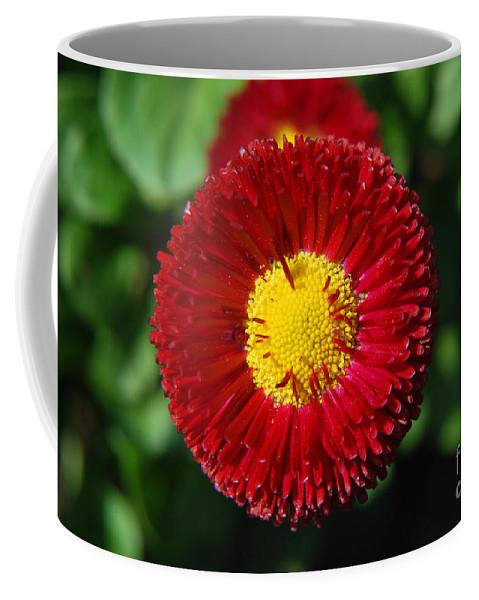 Yhun Suarez Coffee Mug featuring the photograph Round Red Flower by Yhun Suarez