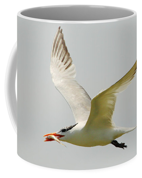 Royal Tern Coffee Mug featuring the photograph Royal Tern by Andrew McInnes