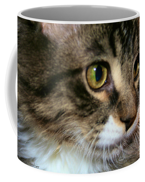 Tabby Cat Coffee Mug featuring the photograph Rufus 4 Months by Susan Herber