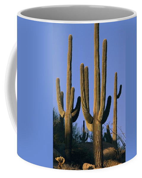 North America Coffee Mug featuring the photograph Saguaro Cacti In Desert Landscape by Richard Nowitz
