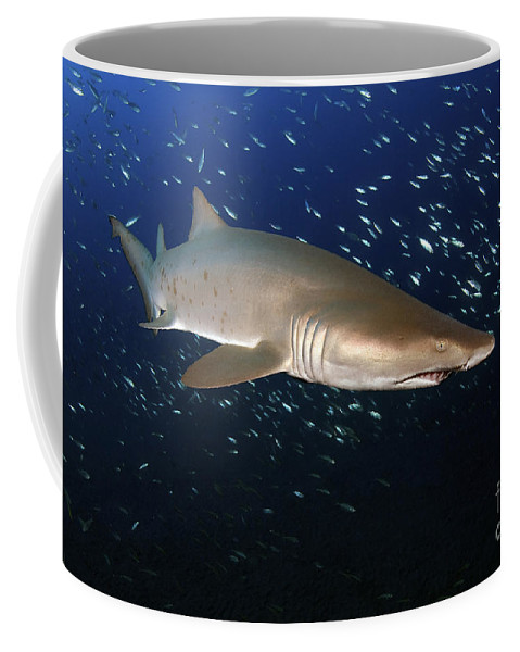 Sand Tiger Shark Coffee Mug featuring the photograph Sand Tiger Shark Off The Coast Of North by Karen Doody
