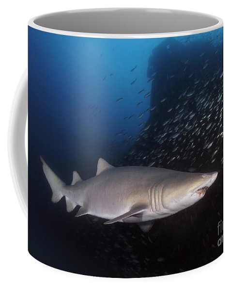 Atlantic Ocean Coffee Mug featuring the photograph Sand Tiger Shark Swims By The Wreck by Karen Doody