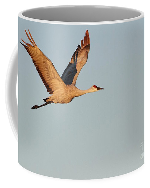 Animal Coffee Mug featuring the photograph Sandhill Crane In The Morning Light by Sabrina L Ryan