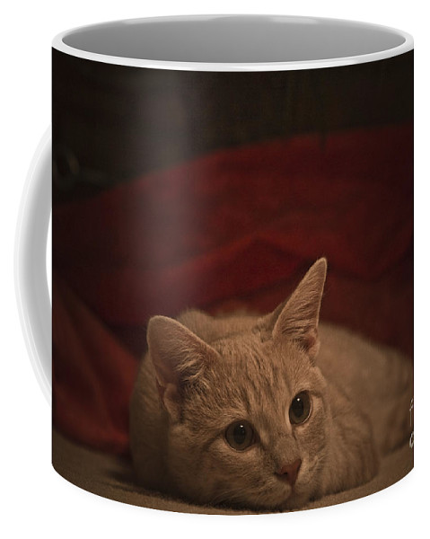 Cats Coffee Mug featuring the photograph Santa Is Coming by Kim Henderson