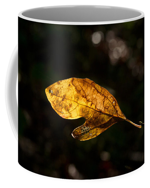 Sassafras Coffee Mug featuring the photograph Sassafras Leaf Glowing by Douglas Barnett