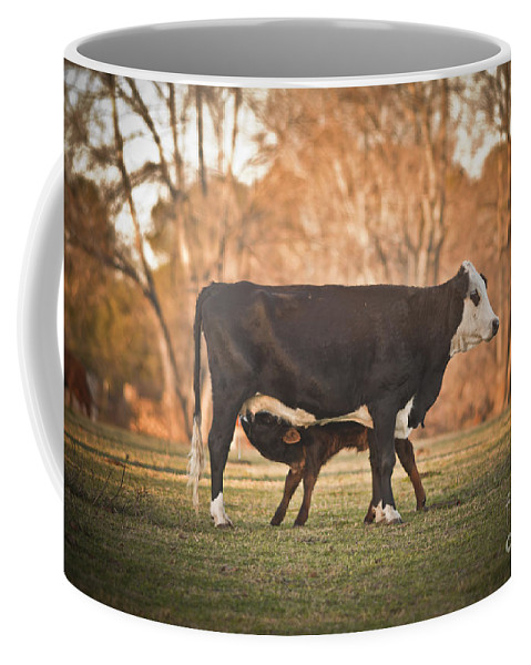 Calf Coffee Mug featuring the photograph Save Some For Later by Kim Henderson