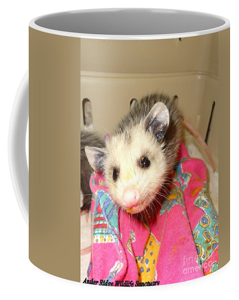 Opossum Photographs Coffee Mug featuring the photograph Say Cheese by Art Dingo