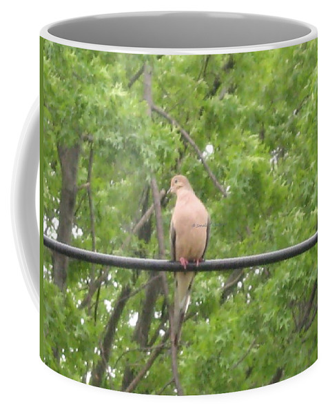 Lovely Dove Coffee Mug featuring the photograph Say Cheese by Sonali Gangane