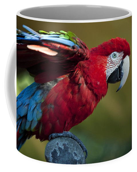 Bird Coffee Mug featuring the photograph Scarlet Macaw by Amy Jackson