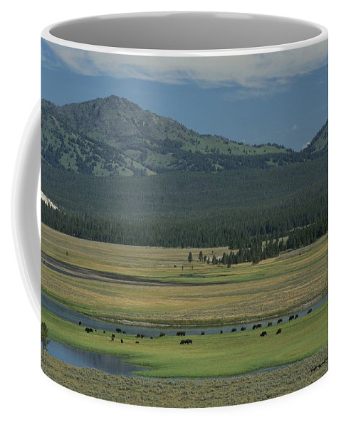 North America Coffee Mug featuring the photograph Scenic Wyoming Landscape With Grazing by Norbert Rosing