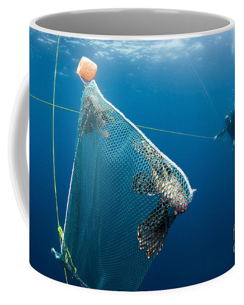 Atlantic Ocean Coffee Mug featuring the photograph Scuba Diver Nets Invasive Indo-pacific by Karen Doody