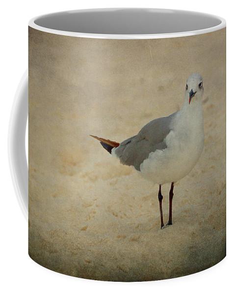 Bird Coffee Mug featuring the photograph Gull by Sandy Keeton