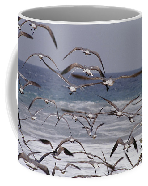 Animals Coffee Mug featuring the photograph Seagulls Fly Over Surf by Raul Touzon