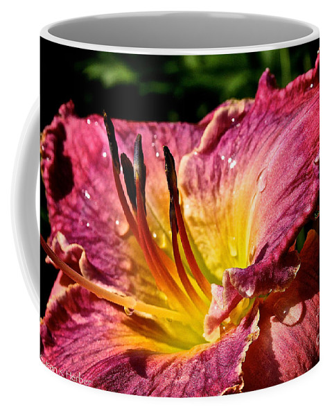 Plant Coffee Mug featuring the photograph Seven Seals Daylily by Susan Herber