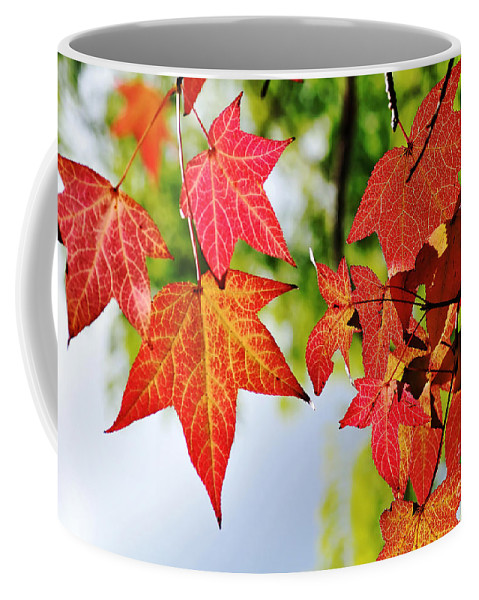 Photography Coffee Mug featuring the photograph Shades Of Red by Kaye Menner