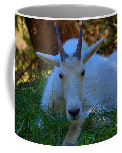 Glacier National Park Coffee Mug featuring the photograph Shady Goat by James Anderson