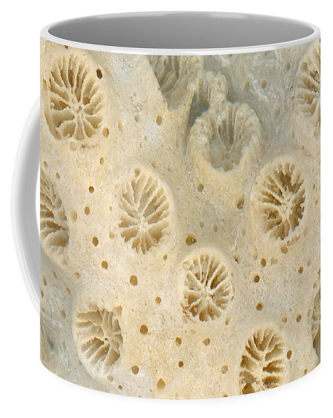 Macro Coffee Mug featuring the photograph Shell - Conchology - Coral by Mike Savad