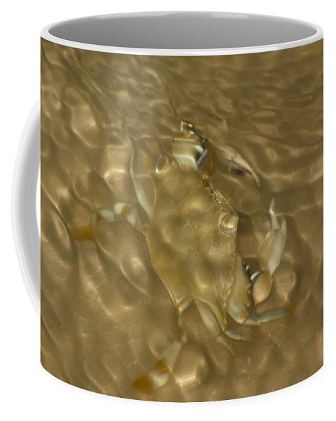Beach Coffee Mug featuring the photograph Shimmering Crab by Ed Gleichman