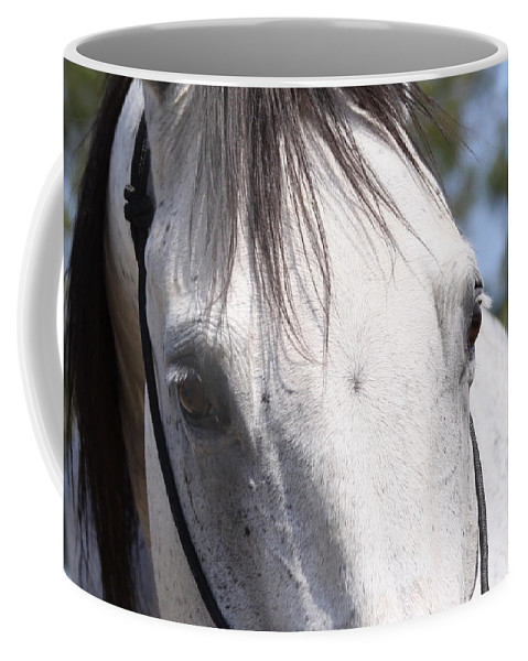Horse Coffee Mug featuring the photograph Show Horse At Mule Days by Travis Truelove