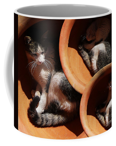 Cats Coffee Mug featuring the photograph Siesta 4 by Xueling Zou