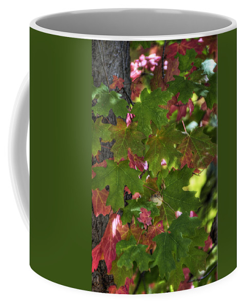 Autumn Coffee Mug featuring the photograph Signs Of Autumn by Saija Lehtonen