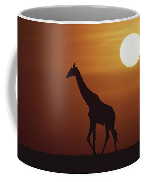 Africa Coffee Mug featuring the photograph Silhouette Of Giraffe Walking by Medford Taylor