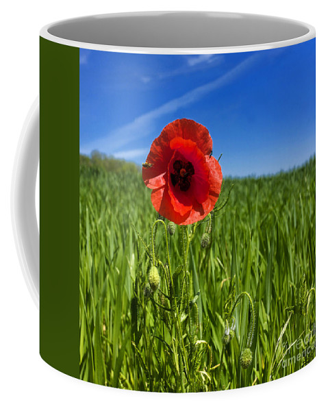 Wheat Coffee Mug featuring the photograph Single Poppy Flower In A Field Of Wheat by Bernard Jaubert