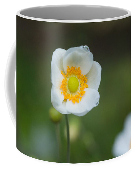 Anemone Coffee Mug featuring the photograph Sinle Dew Drenched Anemone by Douglas Barnett