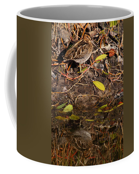 Snipe Coffee Mug featuring the photograph Snipe Hunt by Bruce J Robinson