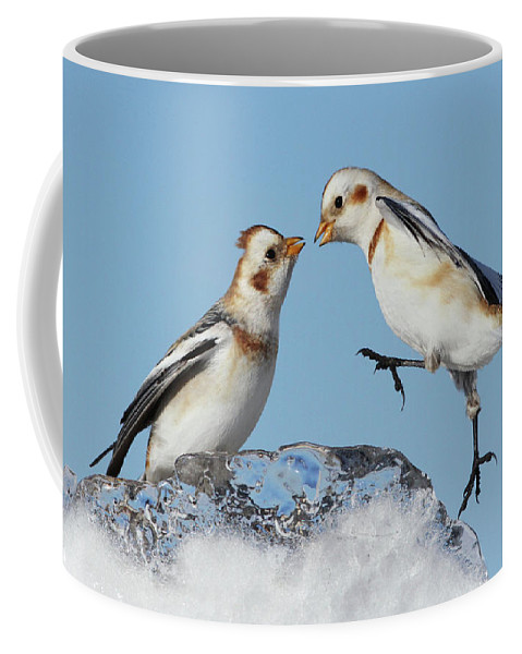 Snow Coffee Mug featuring the photograph Snow Buntings And Ice by Mircea Costina Photography