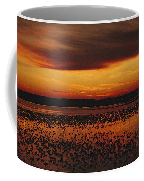Scenes And Views Coffee Mug featuring the photograph Snow Geese Come To Rest In Squaw Creek by Joel Sartore