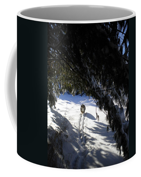 Winter Coffee Mug featuring the painting Snow Trail-under The Boughs by Renate Nadi Wesley