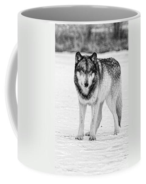 Wolf Coffee Mug featuring the photograph Snow Wolf by Shari Jardina
