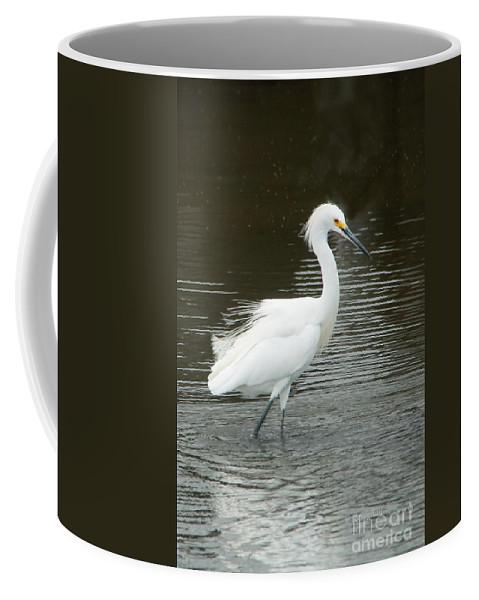 Birds Coffee Mug featuring the photograph Snowy Egret by Regina Geoghan