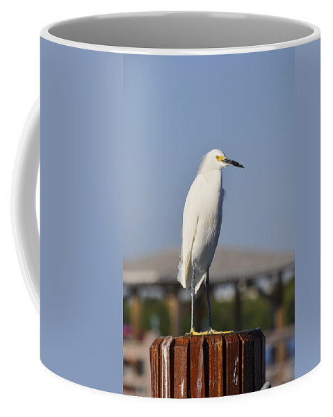 Snowy Egret Coffee Mug featuring the photograph Snowy Egret Stare Down by Christine Stonebridge