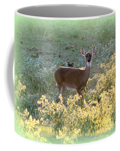 Animals Coffee Mug featuring the photograph So Curious by Kathy White