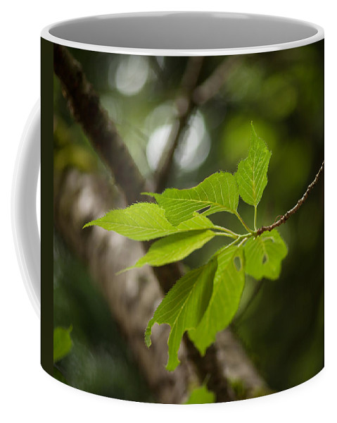 Leaf Coffee Mug featuring the photograph Soaring Leaves by Mike Reid